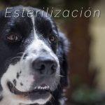 Domingo 20 – Campaña de Esterilización  Quirúrgica a caninos y felinos
