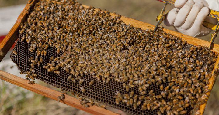 Los apicultores deben movilizar sus colmenas con el correspondiente DT-e